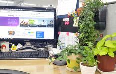 사무실에 식물을 두면 좋은 이유