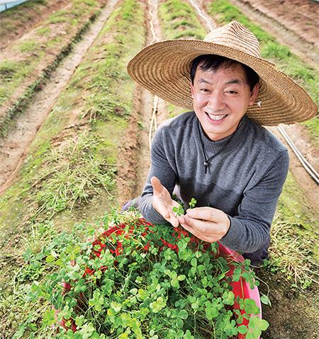 먹는 네 잎 클로버 매일 2만장 수확하는 홍인헌 씨.(사진=C영상미디어)