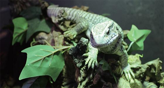 파충류를 사랑하는 사람들에게는 너무도 유명한 '쿠펫'.(사진=조선뉴스프레스)