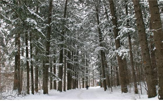 오대산국립공원 전나무숲길.