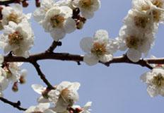 꽃 피는 봄이 왔나봄!···전국 봄꽃 축제 총정리