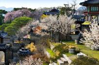 경복궁·창덕궁서 봄의 향연 만끽해볼까