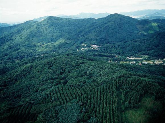 산림청, 나무심기 추진 계획