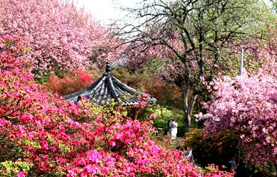 봄 내음 가득한 우리 동네 '꽃동산'
