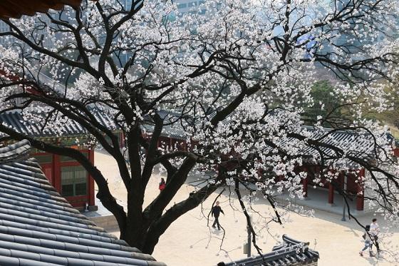 덕수궁 석어당에서 만끽하는 봄풍경 (사진 = 문화재청)