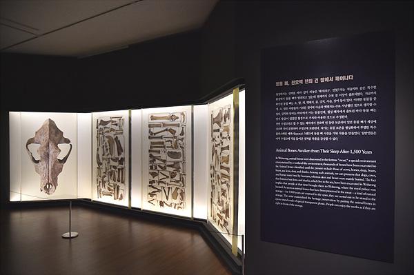 현장에서 출토된 1500년 전 동물 뼈를 이용한 작품.