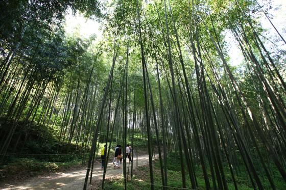 담양 죽녹원 (사진 = 한국관광공사)