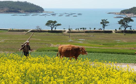유채꽃·청보리 물결…'봄의 향연' 펼쳐진다