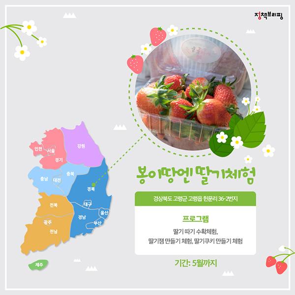 딸기가 좋아! 딸기가 좋아! 싱그러운 4월 딸기 축제 총정리