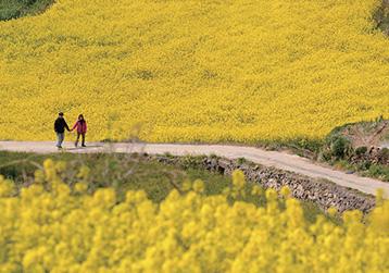 전국 방방곡곡 봄을 보러 가요