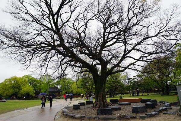 가지는 뻗어도 뿌리는 다르지 않다