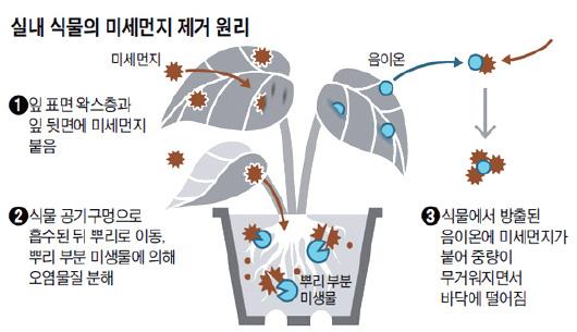 실내 식물의 미세먼지 제거 원리