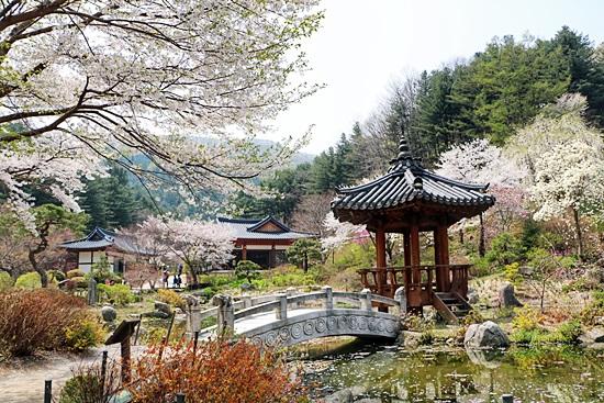 아침고요수목원 서화연의 봄