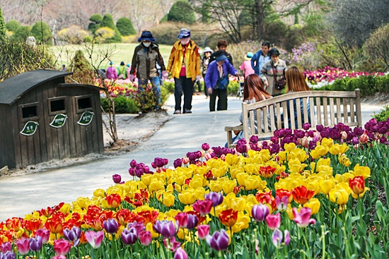 아침고요수목원 봄꽃축제[2018. 4. 21 ~ 5. 27] 하늘정원