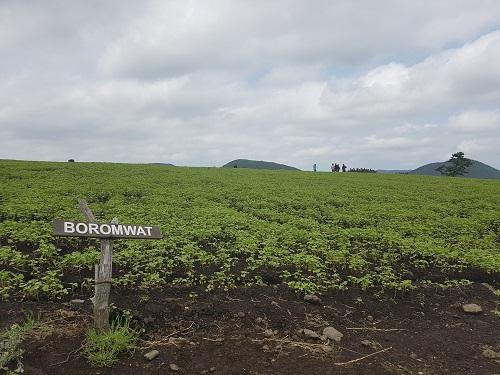 보롬왓을 보여주기에는 사진이 너무하네요.