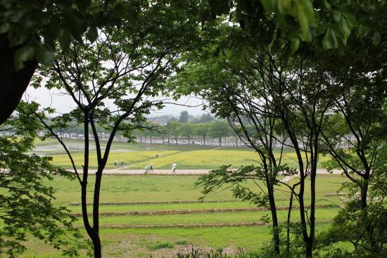 월성에서 바라본 풍경.