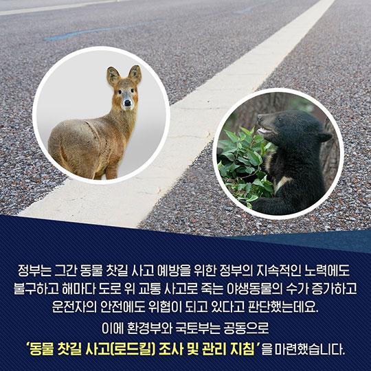 동물 찻길 사고 방지…환경부·국토부·시민사회 손잡다