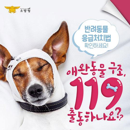 애완동물 구조, 119 출동하나요?