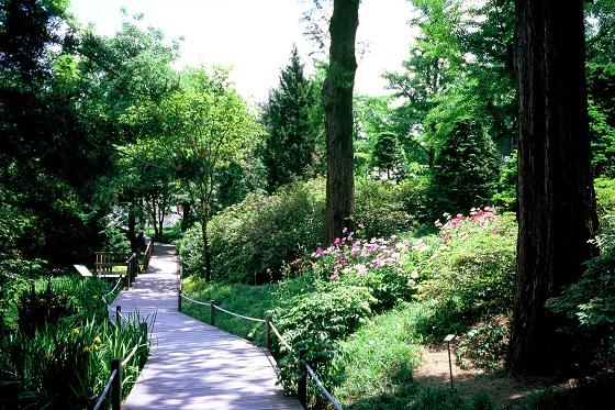 초록의 향기가 가득한 홍릉숲.