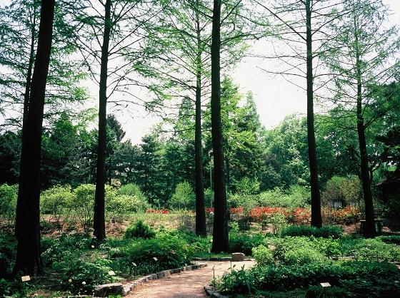 홍릉숲에서 즐기는 도심 속 여름 휴가