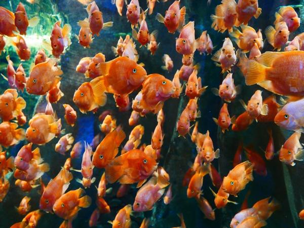 물고기들이 단체 이동하는 모습