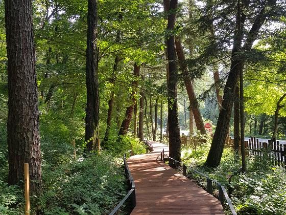 초록이 보는 것만으로도 시원해 지는 광릉숲길.