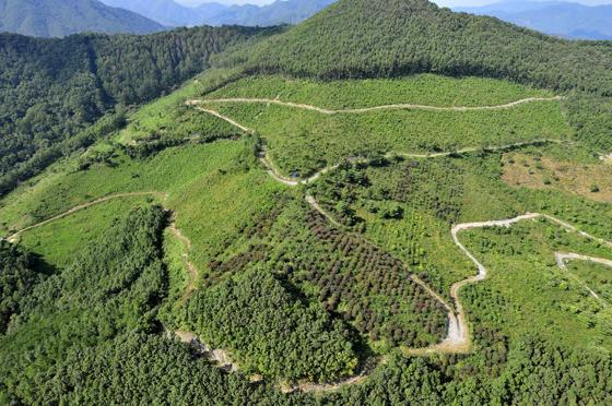적보산 씨앗숲의 전경.