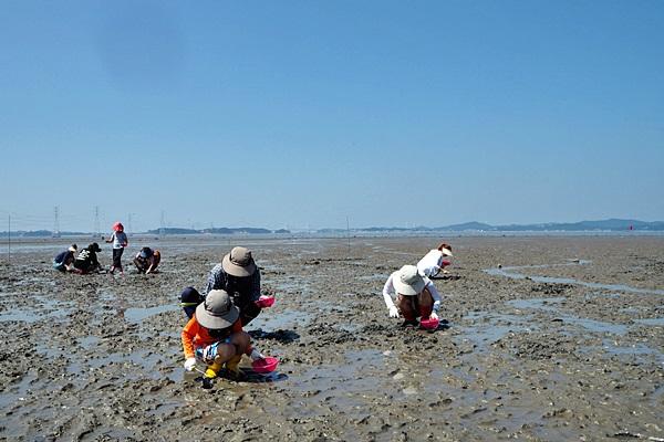 갯벌체험 프로그램을 즐기는 가족단위 관광객들