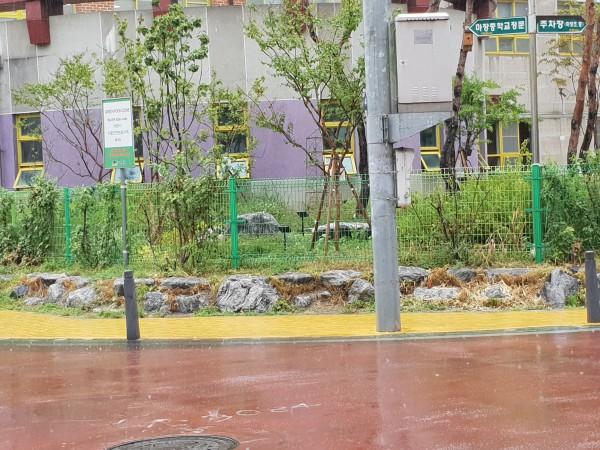 초등학교 사거리 엘로카펫