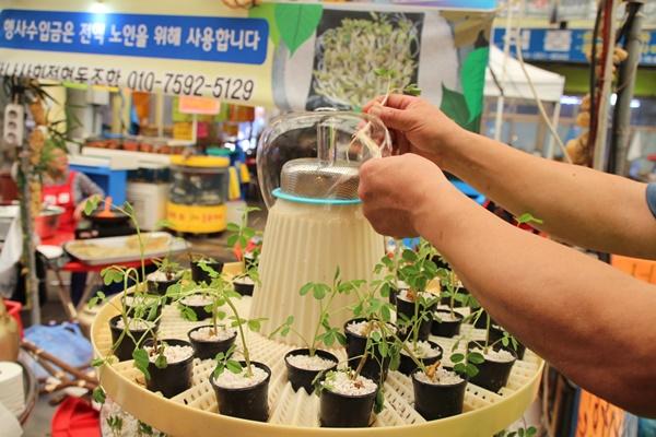 안양중앙시장은 땅콩새싹을 이용한 슈퍼푸드를 개발해서 이벤트로 선보이고 있다.