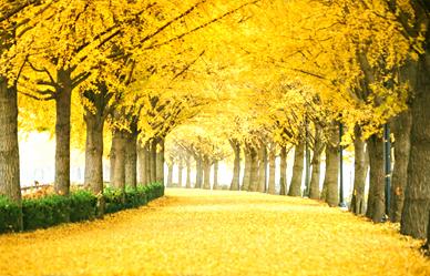 10월 걷기여행길 7선, 알록달록 단풍이 물든 길