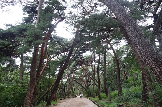올해 가장 아름다운 숲 '통도사 무풍한송길' 선정