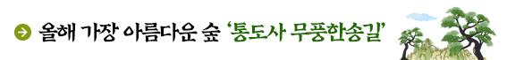 올해 가장 아름다운 숲 '통도사 무풍한송길'