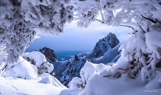 눈이 장관을 이룬 국립공원의 모습.