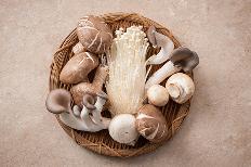 자연의 향 가득한 버섯의 종류와 효능