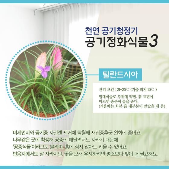 실내공기를 맑게 해 줄 공기정화식물 6가지