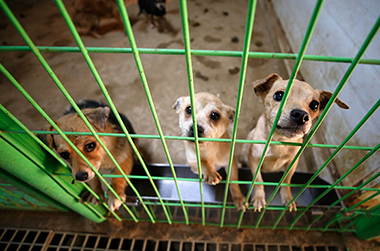 동물 학대해 죽이면 3년 이하 징역 처벌