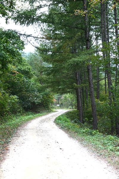 소광리 금강송 숲길.