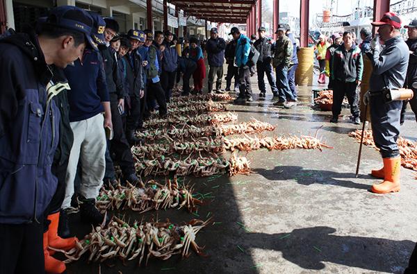 치열한 삶의 모습을 볼 수 있는 강구항의 대게 경매.