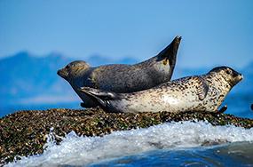 물범의 초대, 평화와 공존의 바다로