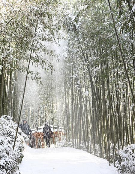 바람이 불면 대나무에 쌓여 있던 눈이 떨어지며 눈 벼락을 내린다.