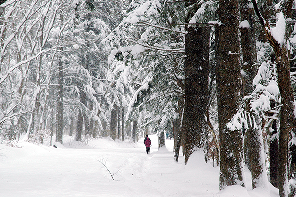 월정사 전나무숲길의 설경.