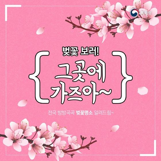 벚꽃 개화시기 체크하고 꽃놀이 가자!