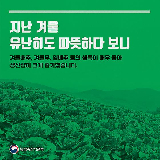 채소류, 수급조절 프로그램 따라 수급안정 지원
