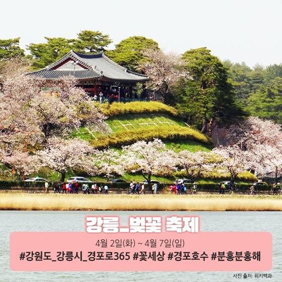기차 타고 떠나는 전국 벚꽃 명소 5