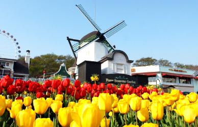 봄·봄·봄 봄이 왔어요! 2019년 봄꽃 지도