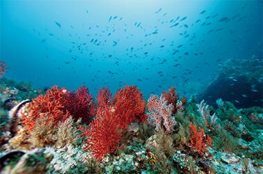 우리나라 아름다운 바닷속 10곳 어디일까?