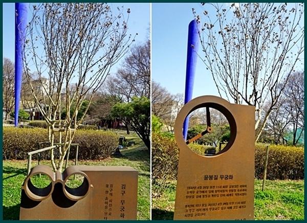 다섯 독립 운동가의 저마다의 의미를 담은 무궁화.안경 모양의 김구 선생 무궁화 등 효창공원에서 만날 수 있다.