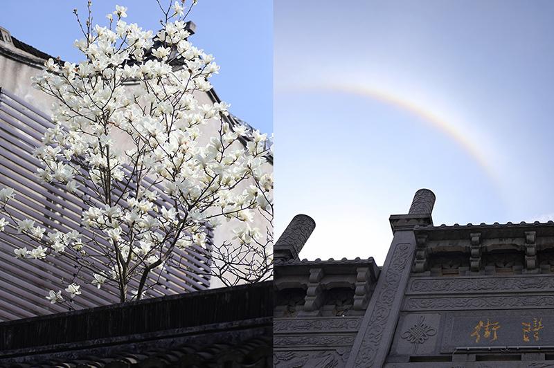 가흥 '김구 피난처'에 핀 목련꽃과 무지개