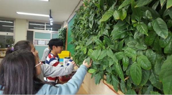 서울삼양초등학교 교실에서 빌레나무를 이용한 시범사업 모습